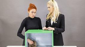 """""""Atspėk, kas dėžėje"""" – dar viena juoko bomba: iš streso Kristinai Ivanovai """"surakino"""" nugarą"""