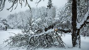 Gausus snygis kelia pavojų gyvybei: kaip elgtis užkritus medžiui ar patyrus kitas traumas?