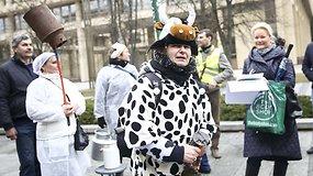 Pieno supirkimo kainomis nepatenkinti ūkininkai grasino emigruoti