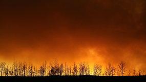 Miškų gaisrai Turkijoje apėmė turistų pamėgtus kurortus, pranešama apie keturis žuvusiuosius