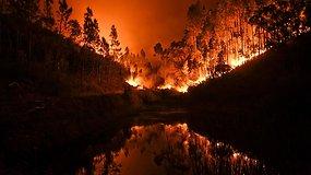 Portugaliją siaubia miško gaisras, bėgti bandę žmonės sudegė tiesiog automobiliuose