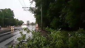 Vėtros nuverstas medis sustabdė troleibusų eismą