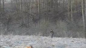 Kauno pareigūnai ieško stirną sudraskiusio šuns šeimininko