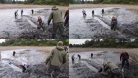 Klaipėdos rajono žvejai gelbėjo nusausinto tvenkinio dumble įstrigusias žuvis
