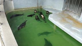 Konferencijoje aptarta ruonių problema: šiemet jau rasti 48 negyvi ruoniai