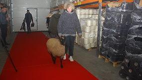 """""""Devold Of Norway"""" gamyklos pristatyme – raudonu kilimu žingsniuojanti avis"""
