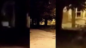 Šalčininkuose po gatvę lakstė nuoga mažylė