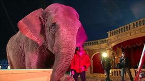 Tapybos darbų aukcione Vengrijoje – cirko dramblės kūryba
