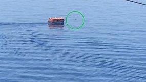 Išgelbėtas už borto iškritęs ir beveik parą vandenyje praleidęs kruizinio laivo įgulos narys
