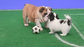 Pasaulio čempionato keliamą stresą siūloma malšinti stebint šuniukų futbolą