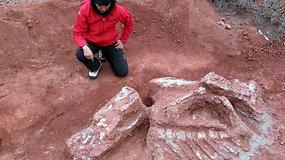 Argentinos mokslininkai tiki radę pirmojo dinozauro-milžino fosiliją