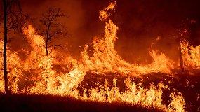 Šiaurės Kaliforniją niokoja pražūtingi miško gaisrai