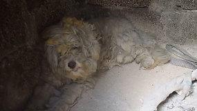 Jaudinanti akimirka gaisrų nuniokotoje Graikijoje: savanoriai rado pasislėpusį šunį
