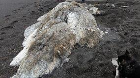 """Paslaptingas į Rusijos krantus išplautas """"plaukuotas jūrų monstras"""" viliojo smalsuolius"""