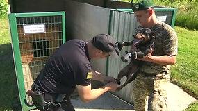 Ukrainos Lvovo regiono pasienio šunys dėvi ypatingas kojines