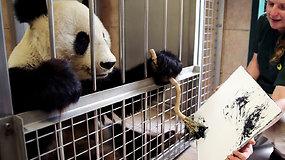 Vienos zoologijos sodo žvaigždė: pandos piešinio kaina siekia 500 eurų