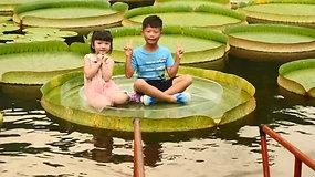 Taipėjaus parko lankytojai pozavo ant net 65 kg išlaikančių lelijos lapų