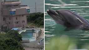 Palikti vieni: apleistame akvariume dienas leidžia vienišas delfinas ir apdulkėję pingvinai