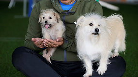 Augintinis galės gyventi amžinai:  Kinijoje klonuotas šuo