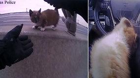 Pareigūno poelgis nepaliko abejingų: išgelbėjo ir priglaudė greitkelio viduryje įstrigusią katytę