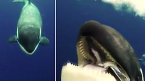 Mokslininkė vos išvengė susidūrimo su orka – pavyko užfiksuoti neeilinį vaizdą
