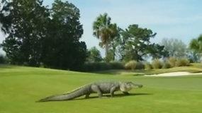 """""""Monstras"""" golfo aikštyne sutrikdė žaidėjus – skleidžiamas garsas priminė dinozaurą"""