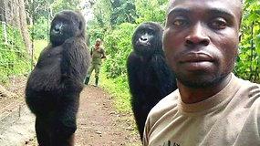 Pasaulį užkariavusios gorilų asmenukės autorius atskleidė, kaip užfiksavo išskirtinę akimirką