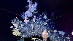 Paslaptinga giliausia žemės vieta nepaliauja stebinti – aptikti reti jūros dugno sodai