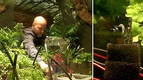 Mokslininkai laukia neįtikėtinos akimirkos – pirmosios augalo asmenukės
