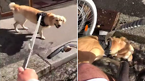 Smagus vaizdelis: šeimininkas skubėjo nufilmuoti per karščius vietoje nenustygstančio šuns elgesį