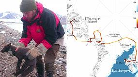 Mokslininkai liko be žado: poliarinė lapė per rekordiškai trumpą laiką nukeliavo iš Norvegijos į Kanadą