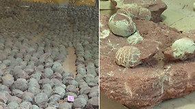 Netikėtas dešimtmečio atradimas nudžiugino mokslininkus: rado 66 mln. m. senumo dinozaurų kiaušinių