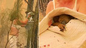 Nepaisydama gresiančio pavojaus moteris įbėgo į liepsnas – išgelbėtos koalos istorija sujaudino tūkstančius