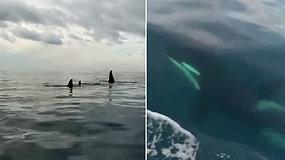 Žvejus pribloškė susidūrimas su pirmą kartą vietovėje pastebėtais svečiais – išgąsdino jų dydis