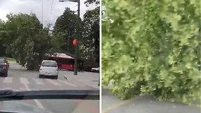 Kauno centre išlūžo senas medis – stojo troleibusų eismas