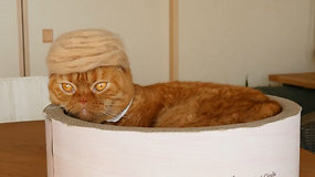 Perukai katėms: japonė velia kepurėles iš augintinių vilnos