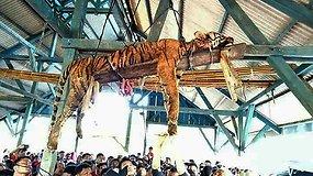 Indonezijoje žmonės žiauriai nužudė nykstančios rūšies sumatrinį tigrą