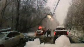 Medis užvirto ant elektros laidų – vos išvengta nelaimės