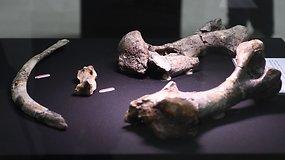 Žmonės FIlipinuose apsigyveno prieš 709 tūkst. m. – daug anksčiau nei manyta iki šiol