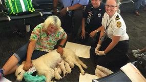 Floridos oro uoste nelaukti keleiviai: terminale asistuojantis šuo susilaukė šunyčių