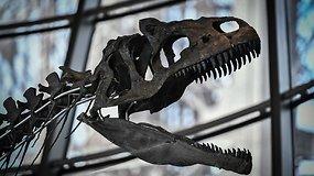 Neatpažinto dinozauro skeletas Paryžiuje parduotas už 2 mln. eurų