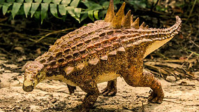 Meksikos mokslininkai rado naujų, prieš 85 mln. m. gyvenusių, dinozaurų rūšių