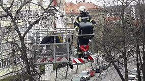 """Velykų popietę ugniagesiai skubėjo gelbėti į medžio viršūnę įlipusios katės – šeimininkai dėkojo ir šaukė """"Bravo!"""""""