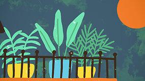 """""""Sodas balkone"""": kaip pasirinkti tinkamiausius augalus balkonui ir ką daryti, kad nenusiviltumėte derliumi?"""