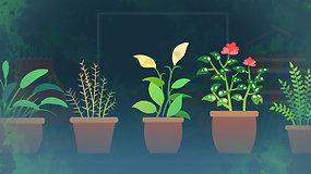 """""""Sodas balkone"""": prieskonių auginimas ir priežiūra – viskas, ką svarbu žinoti apie sodinimą namuose"""