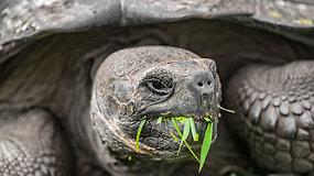 Galapaguose aptikti vėžliai, kurie buvo laikomi išnykusiais