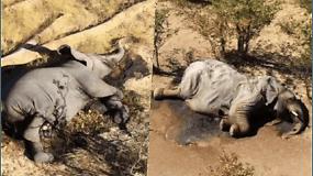 Dėl nežinomos priežasties Bostvanoje nugaišo net 400 dramblių