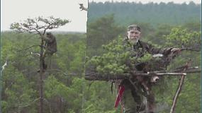 Mokslininkas pats lipa į medžius ir suka juose lizdus – nutarė pagelbėti paukščiams