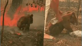 Paviešinti nauji skaičiai: per Australijos gaisrus nukentėjo trigubai daugiau gyvūnų, nei buvo manyta