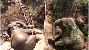 Gelbėtojams teko nelengva užduotis, o mažyliui pasisekė – iš duobės iškeltas įstrigęs drambliukas